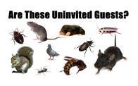 Image 3 | Best Price Exterminators