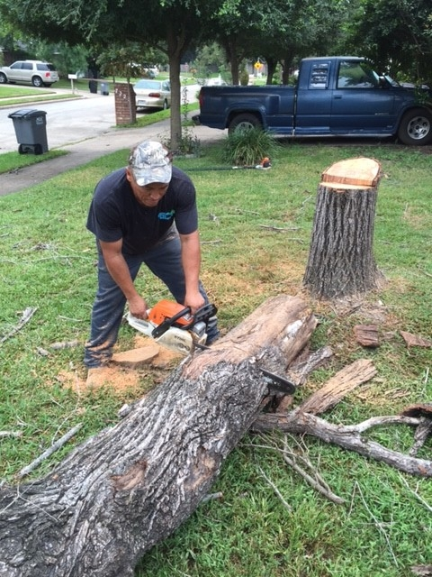 Houston Tree Removal Service image 5