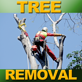 Arborist USA image 0
