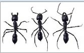Statewide Pest Control image 3