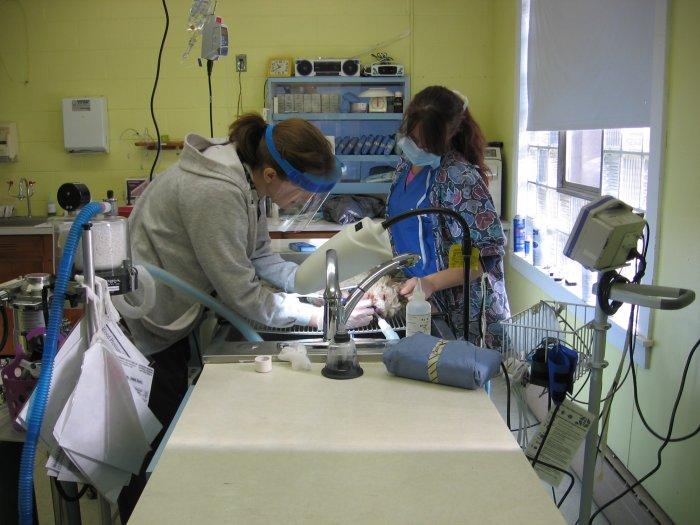 VCA Windham Animal Hospital image 3