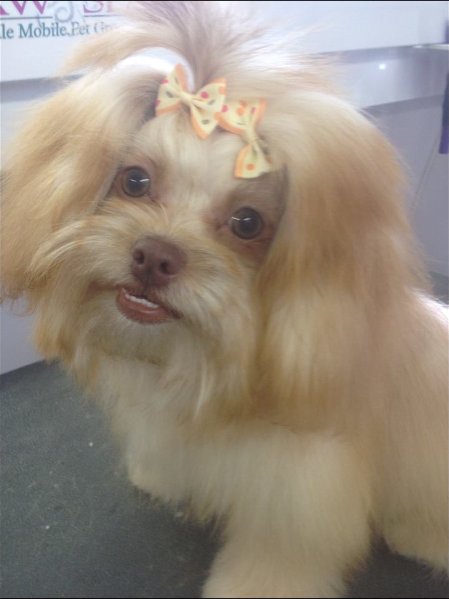 Le Paw Spa Mobile Pet Grooming image 13
