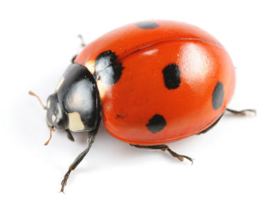 Rogue Pest Solutions image 0