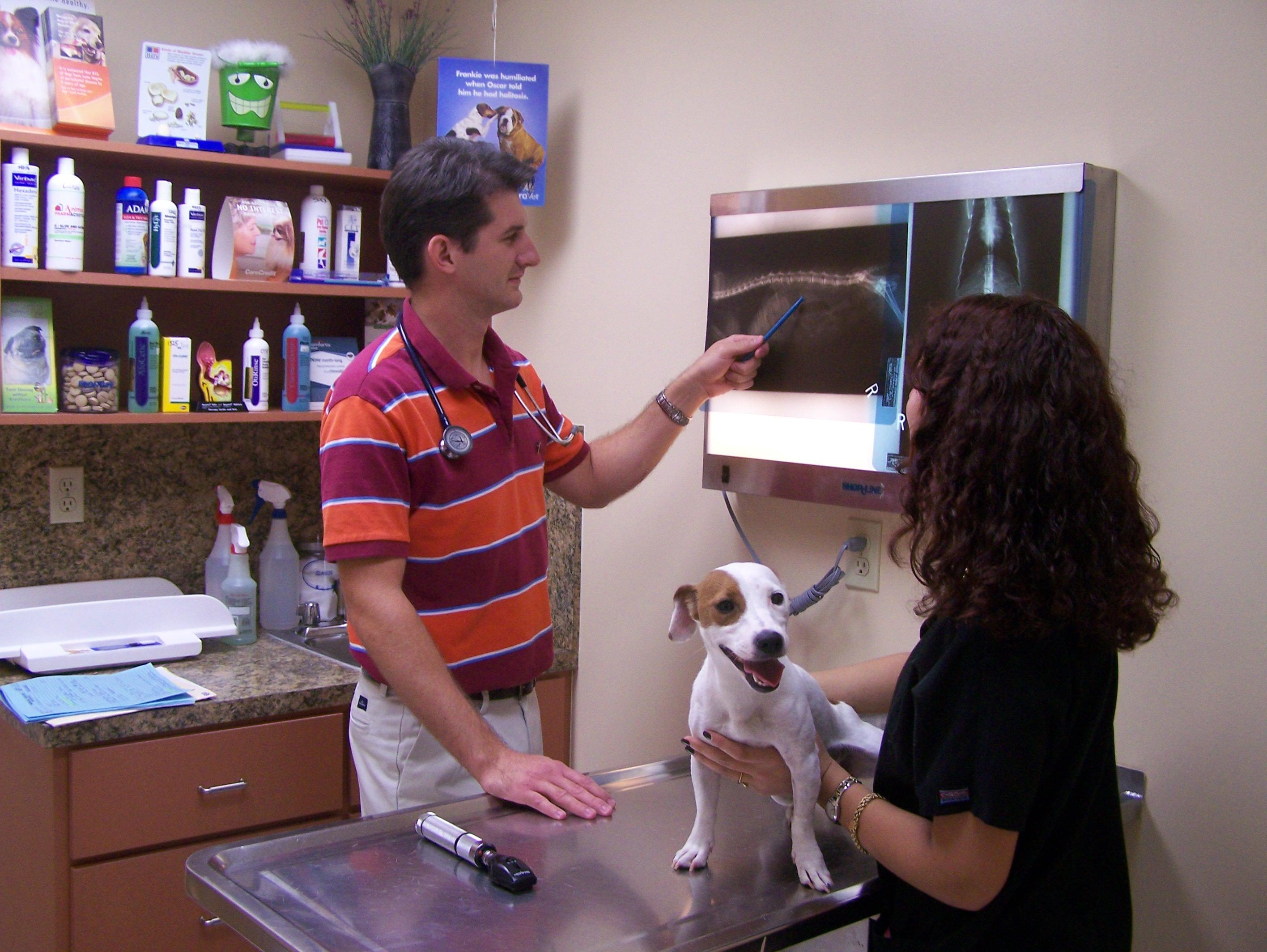 Community Animal Hospital of Royal Palm Beach image 2