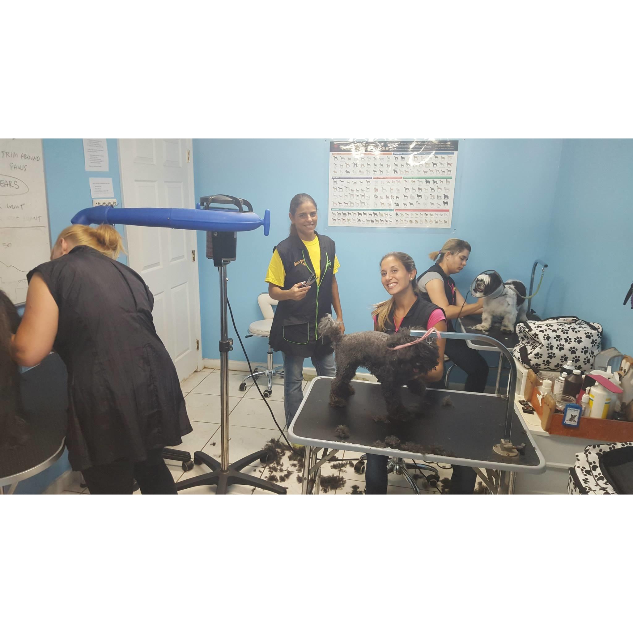 Dog Training Schools In Miami Fl