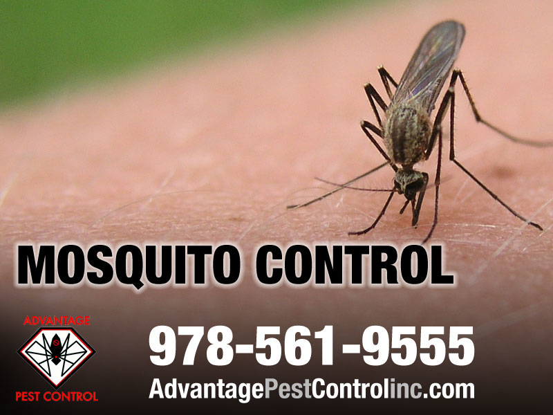 Advantage Pest Control, Inc image 10