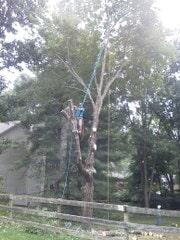 Holcomb Tree Experts image 1