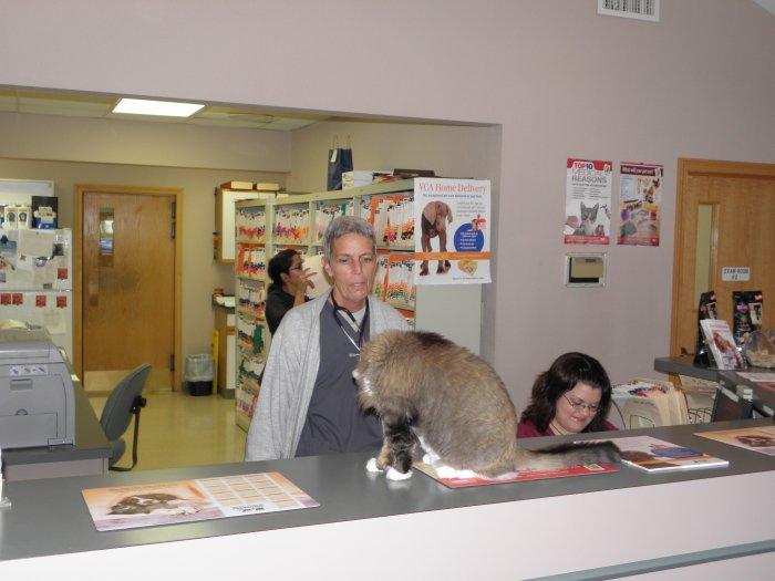 VCA Shadeland Animal Hospital image 4