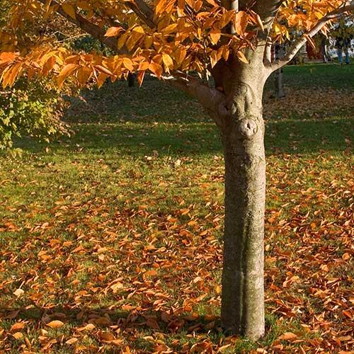 C's Tree Service