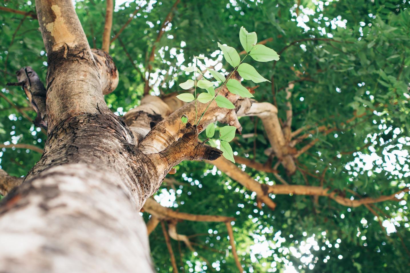 Sunshine Tree Trimming image 2