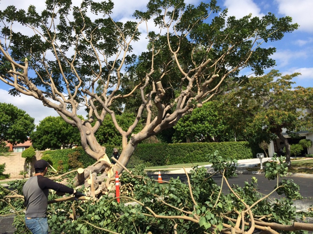 Tree service in fallbrook ca fallbrook california tree for Tree and garden services