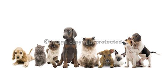 Brandywine Hospital For Pets image 0