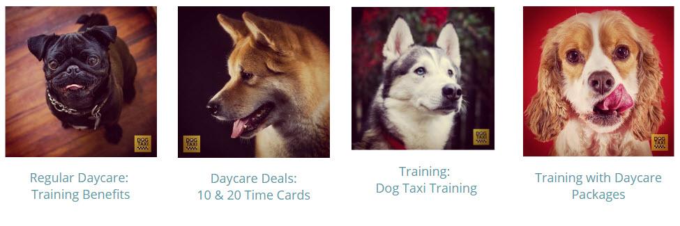 Dog Taxi Daycare & Hotel