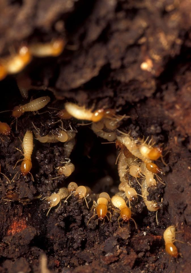 Stormin' Norman Termite and Pest Control image 1