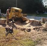 Dunn's Tree Service image 3