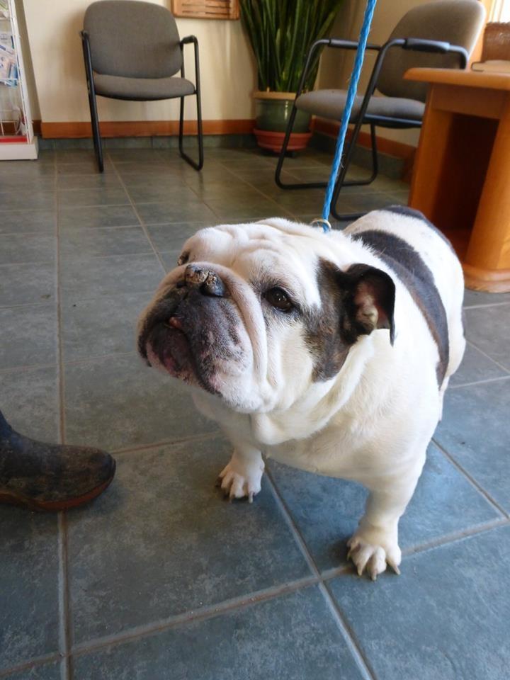 Powell Veterinary Service image 5