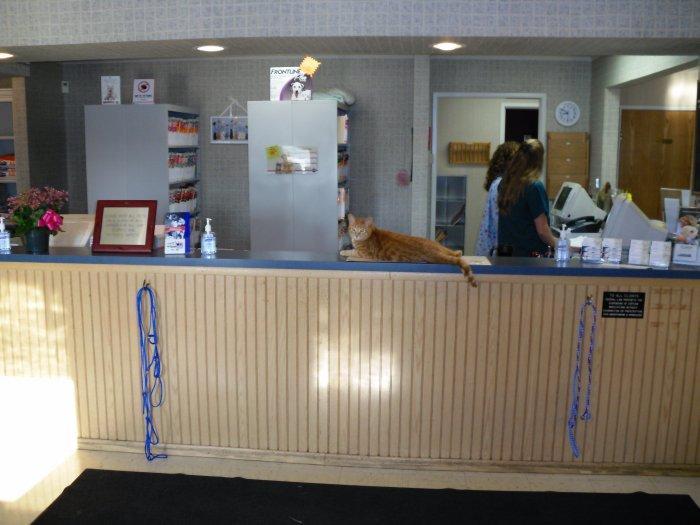 VCA Village Park Animal Hospital image 6