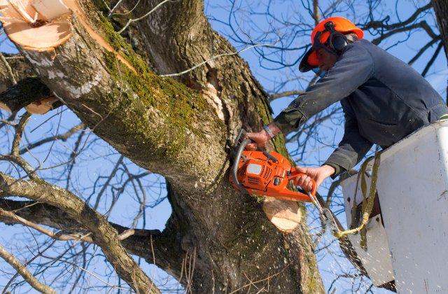 J & J Tree Services image 0