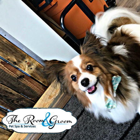 The Room & Groom, Pet Spa & Services image 48