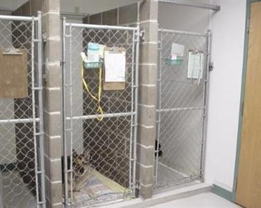 Bridgeton Animal Hospital image 3