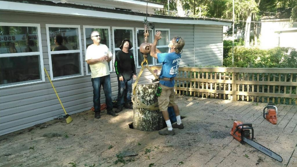 Easy Care Tree Service image 5
