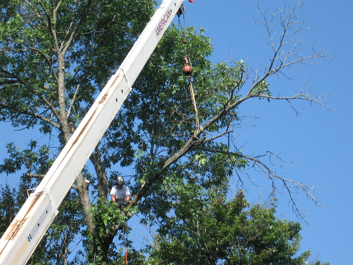 Hill Treekeepers image 8