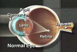 Eye Clinic Of Racine, Ltd image 3