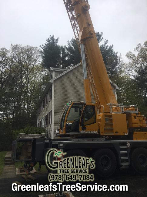 Greenleaf's Tree Service image 32
