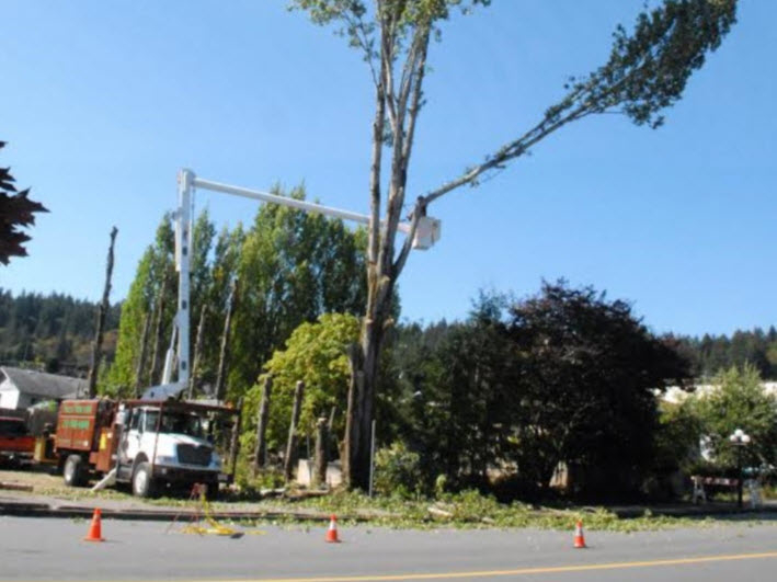 Libra Tree Services Ltd in Duncan