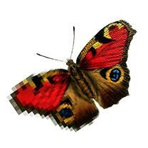Papillon Printing