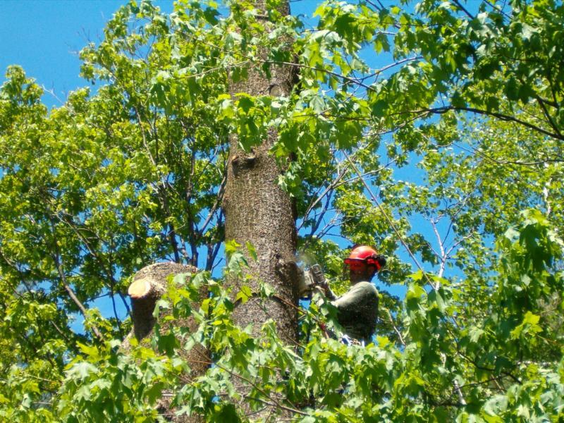 Arboriculture Ecp à Saint-Hippolyte