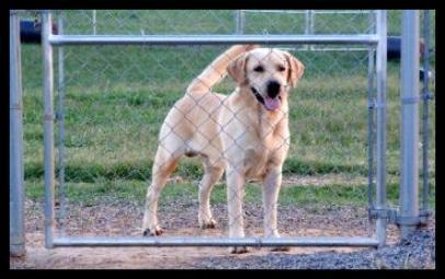 Cross Plains Kennels image 12