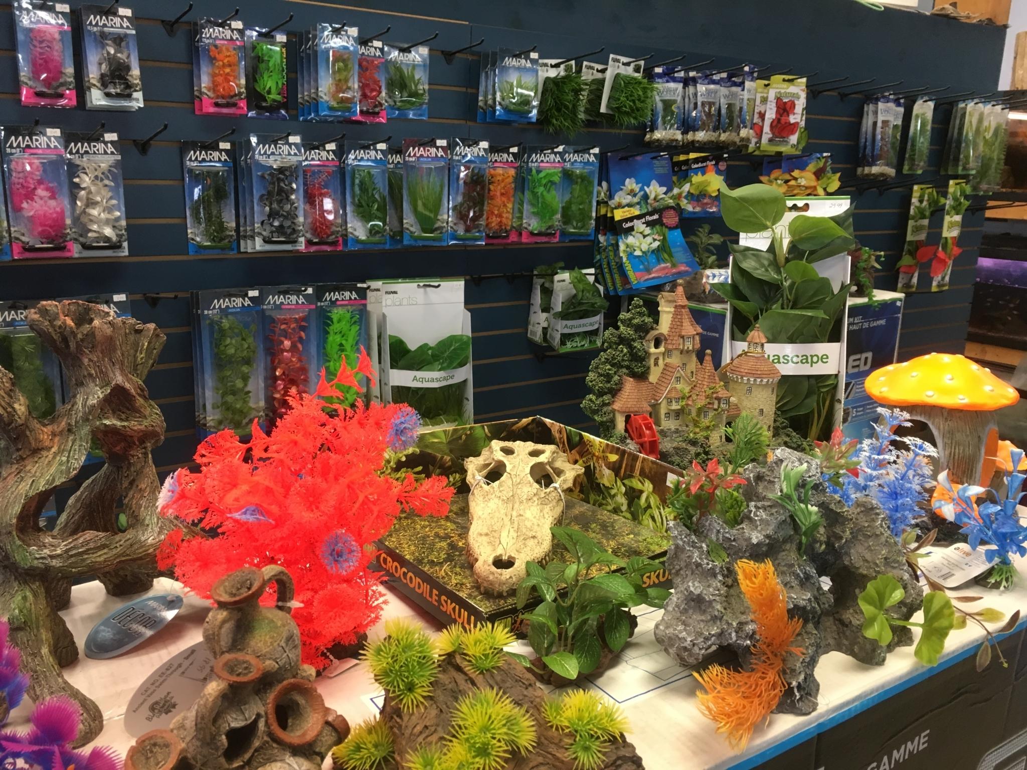 Exotic Aquatic in Williams Lake: aquarium accessories