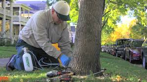 Arborcare by Kluver LLC image 0