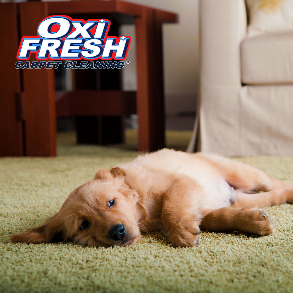Oxi Fresh Carpet Cleaning image 2