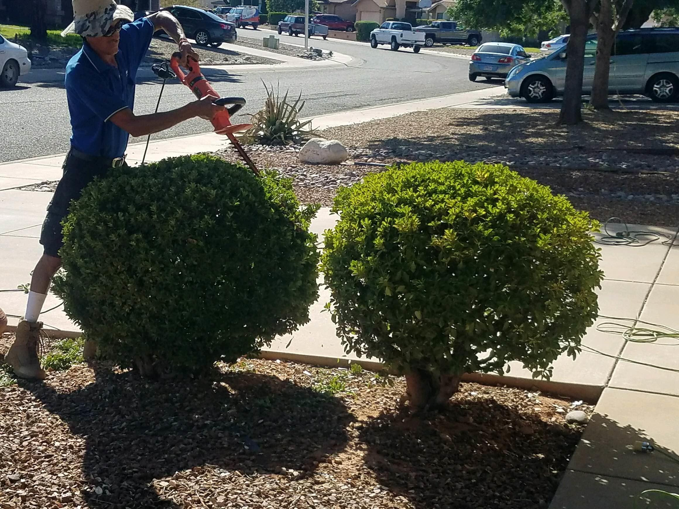 Rafless Landscaping and Tree Service