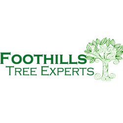 Foothills Tree Experts