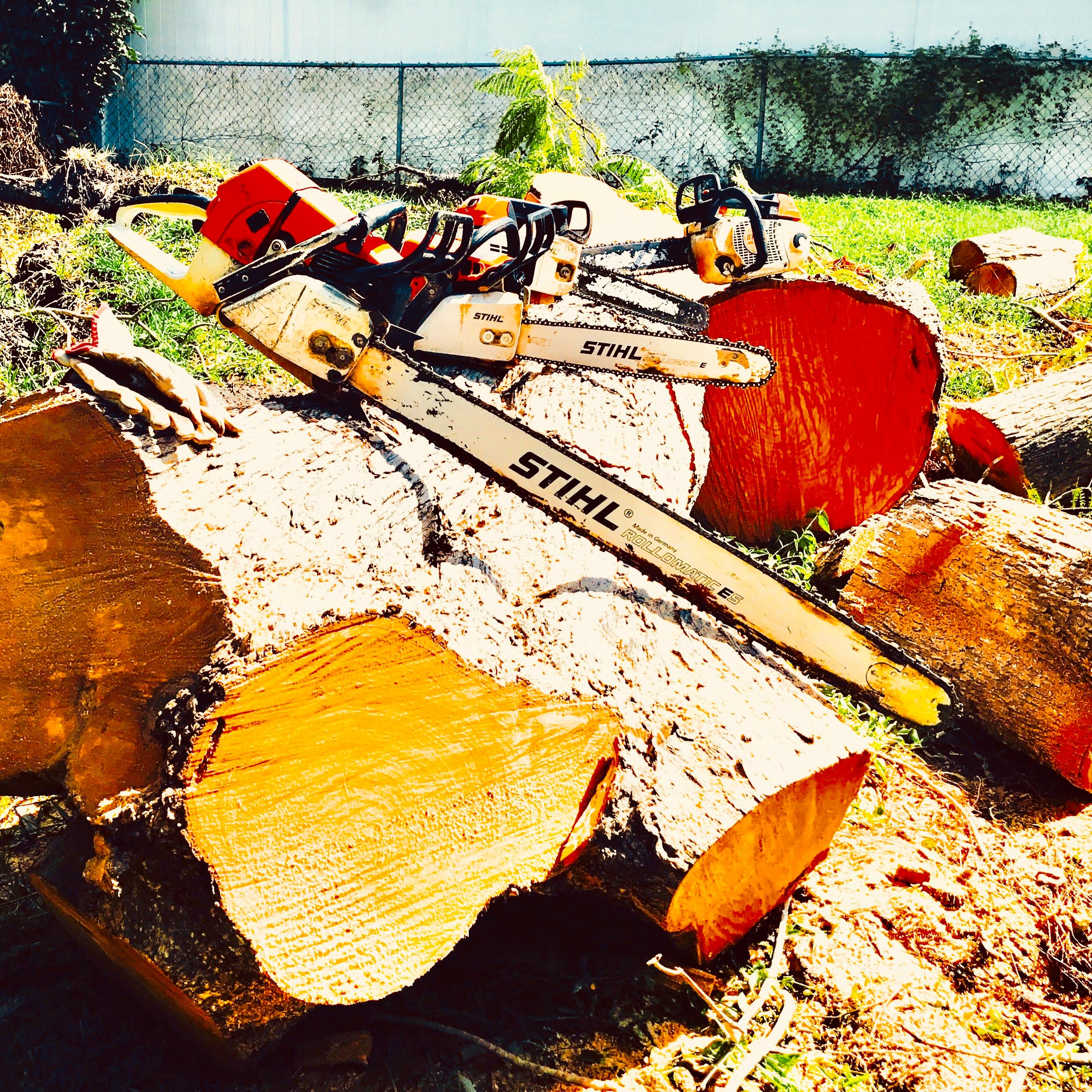 Troyer Tree Service image 4