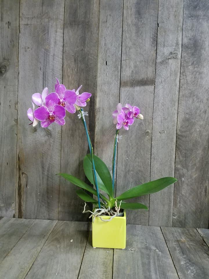Picket Fence Floral & Design image 8
