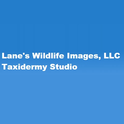 Lane's Wildlife Images, LLCTaxidermy Studio