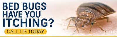 Bye Bye Bugs image 4