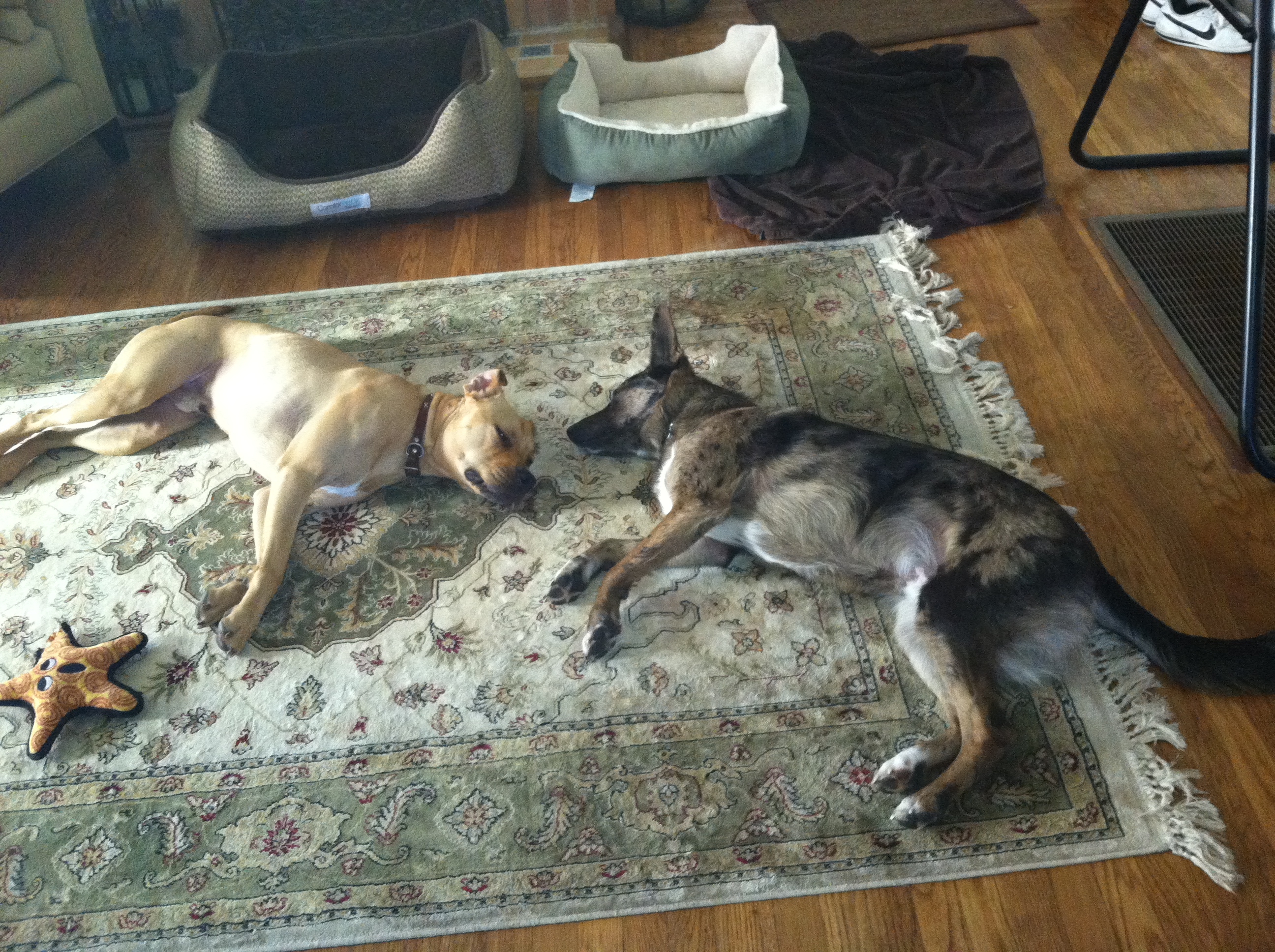 Fetch! Pet Care image 18