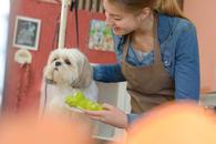 Premium pet grooming services