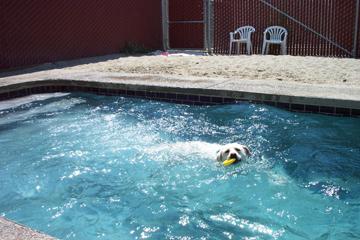 Elite Dogs Training & Boarding image 0