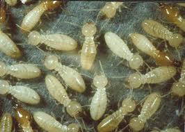 D & T Pest and Termite Control, Inc. image 14