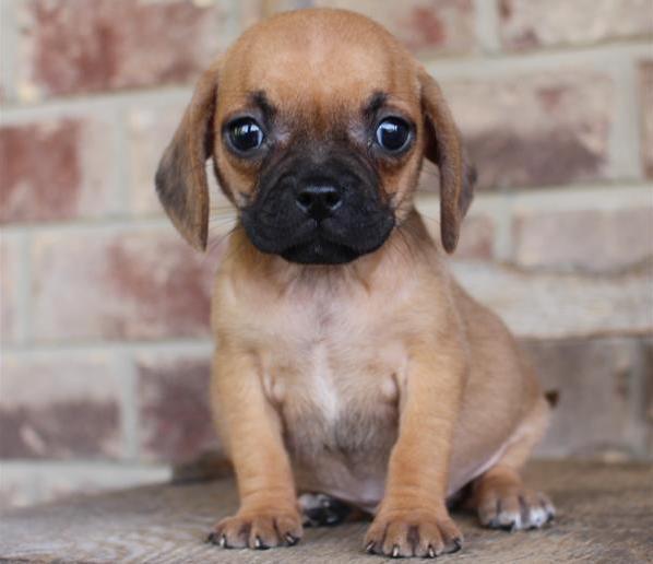 Chews A Puppy image 1