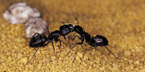 TAAP Pest Elimination image 6
