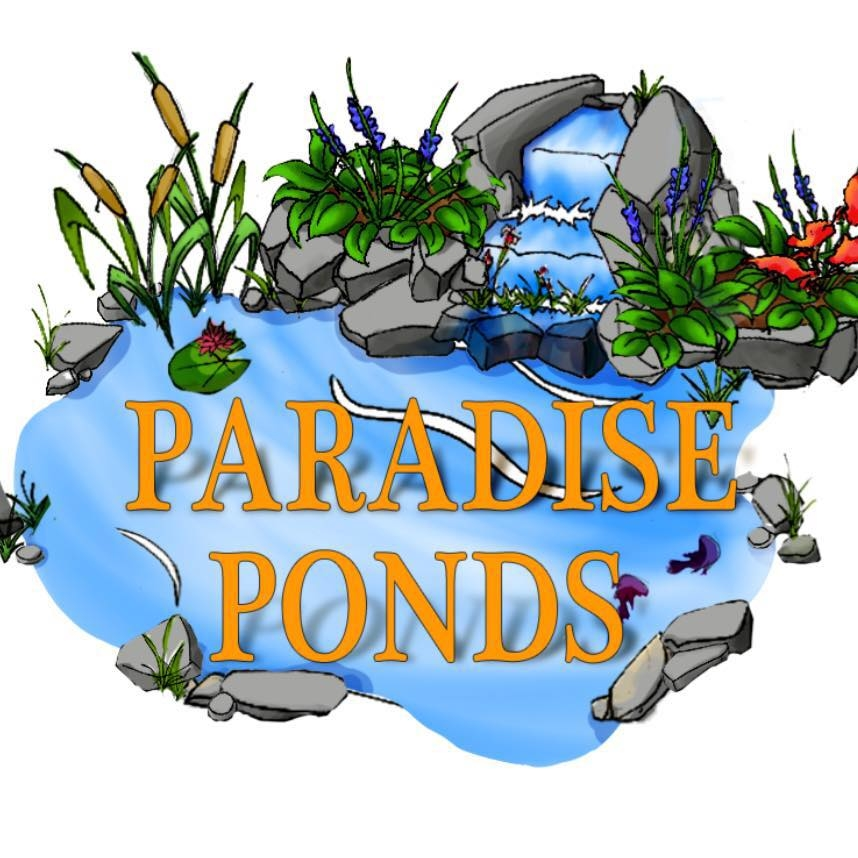 Paradise Ponds by Ed Dedicke