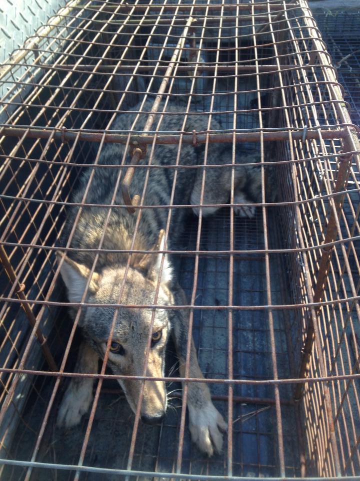 PeeDee Wildlife Control, Inc. image 4