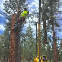 Central Oregon Tree Experts image 20